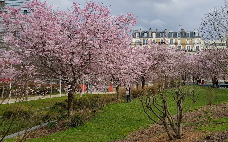 Le printemps au parc Martin Luther-King